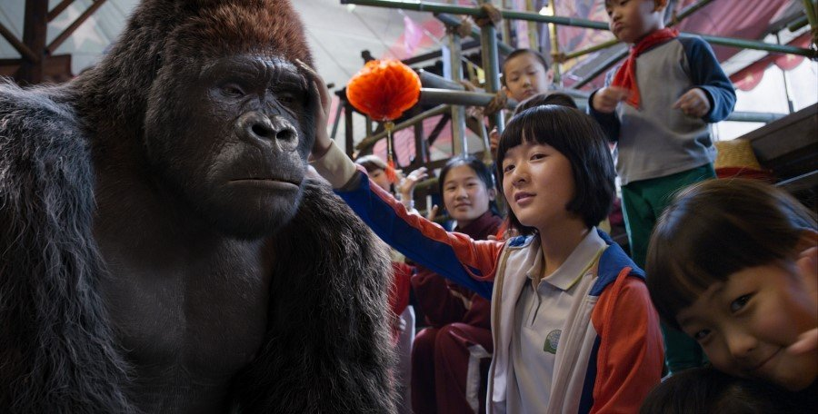 gorilla-ling-ling-and-trainer-wei-wei-form-an-loving-bond-in-the-circus